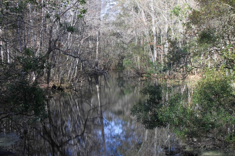 wakulla springs state park in the Florida panhandle