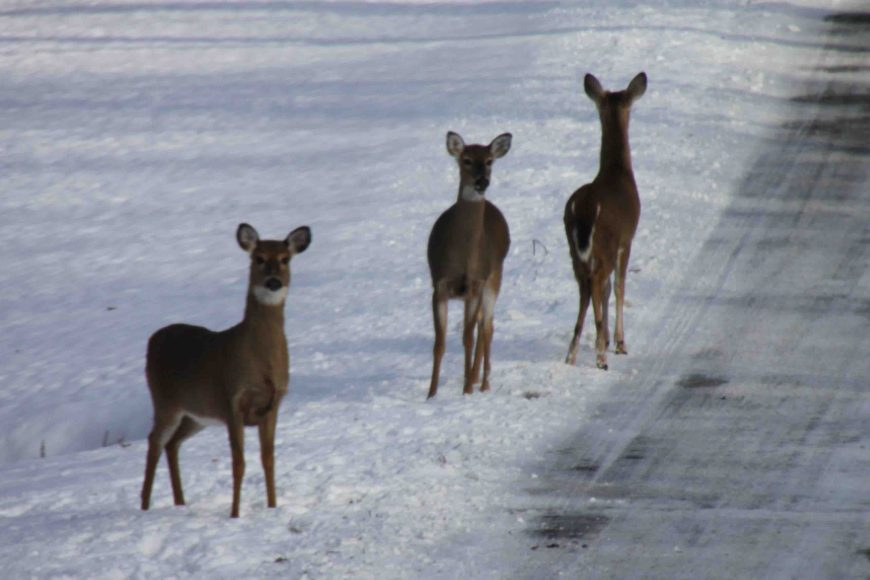 deer in the snow at mammoth cave national park