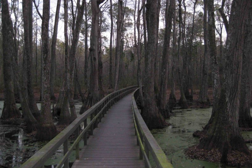 cypress swamp on the natchez trace parkway