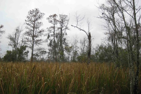 Jean Lafitte National Historical Park and Preserve, Barataria Region