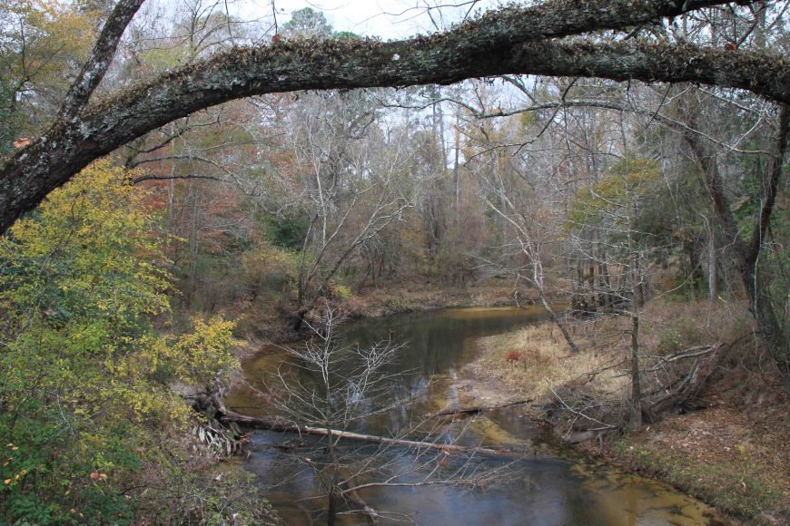 big thicket national preserve in East Texas