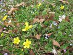 wildflowers tenkiller lake state park