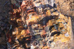 IMG_2485 petrified wood