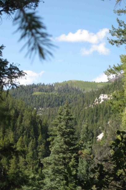 IMG_2848 colorado trail