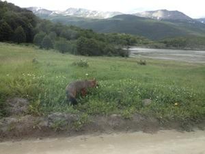 fox tierra del fuego national park