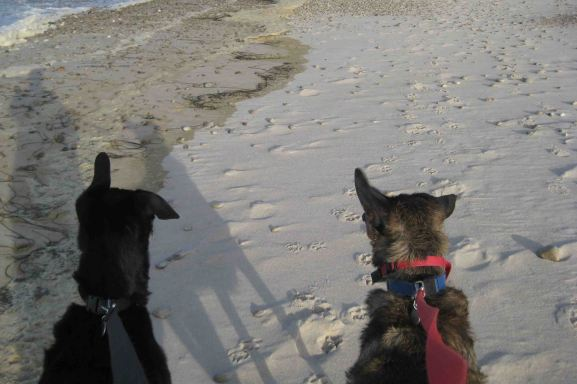 my dogs at sandy neck beach in cape cod