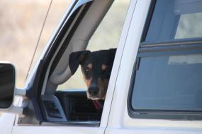 Waiting for his mama in Big Bend