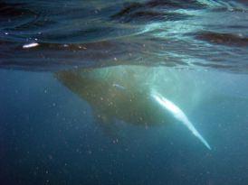 IMG_3106 whale