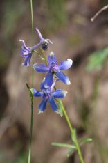 IMG_4171 flower