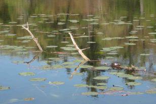 IMG_4411 turtle