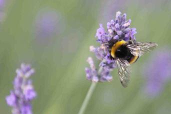 IMG_4318 bee