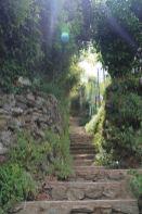 IMG_4372 trail