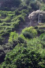 IMG_5030 stairs
