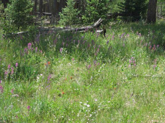 IMG_5362 wildflowers