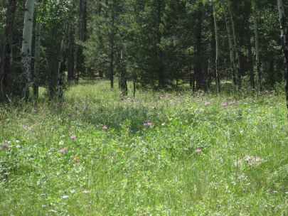 IMG_5467 meadow