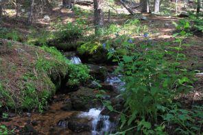 IMG_5473 wf creek