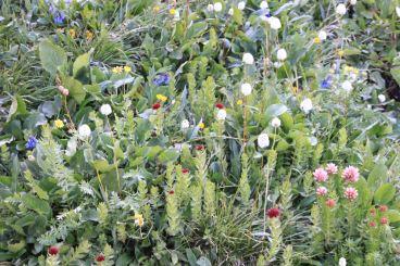 IMG_5593 wildflower