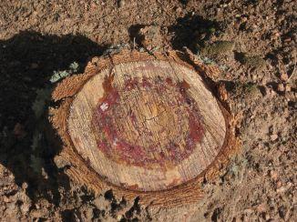 free cut tree