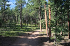 IMG_5676-1 beg of trail