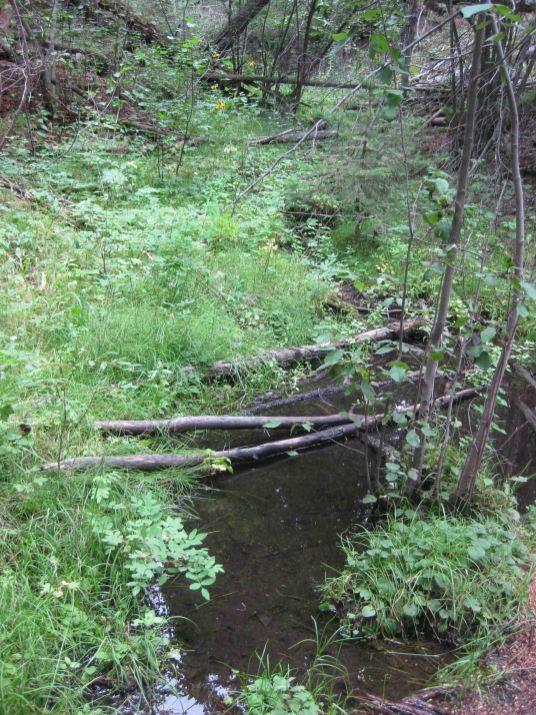 creek on the colorado trail