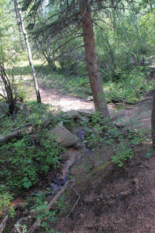 stream on the Colorado trail