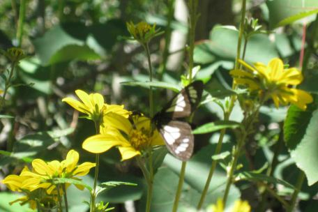 IMG_5729 butterfly