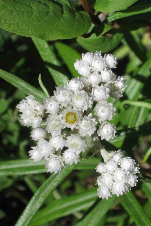 IMG_5736 flower