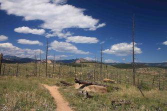 burn area on segment 2 colorado trail