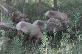 IMG_5779 herd