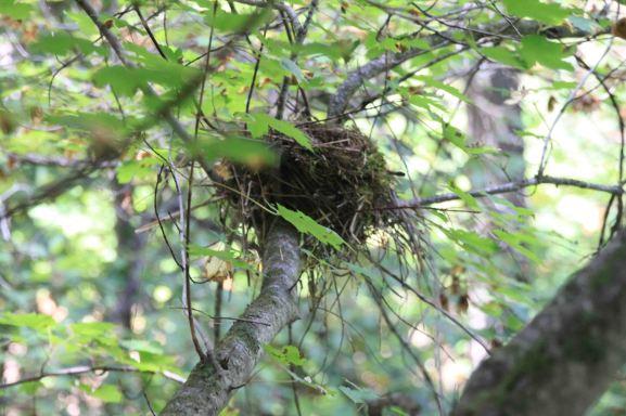 IMG_5795 nest
