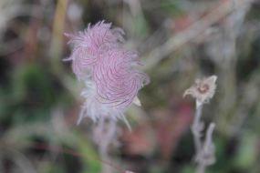 IMG_6400 flower