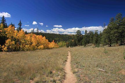 the colorado trail segment 5