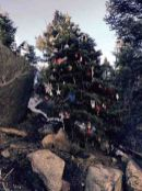 tree at the incline