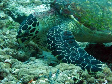 photo1430313078109 turtle