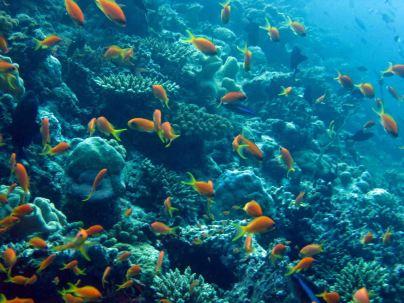 photo1430313763831 fish