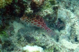 photo1430313913443 fish