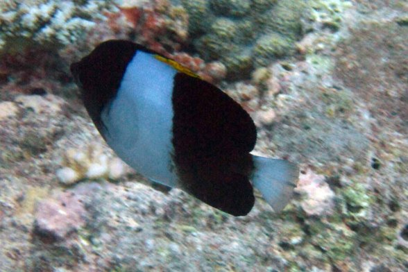 photo1430314020979 fish