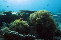 photo1430314141438 anemones
