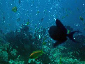 photo1430315484333 fish