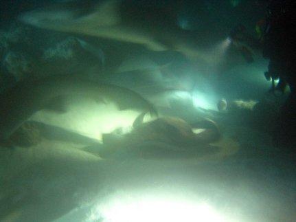 photo1430315851708 sharks rays