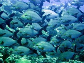 photo1430315999845 fish