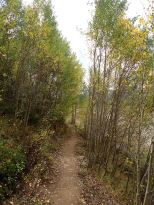 ended with some more aspens