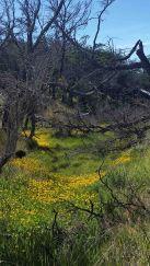 meadow of flowers