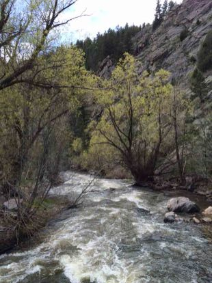 IMG_4517 creek