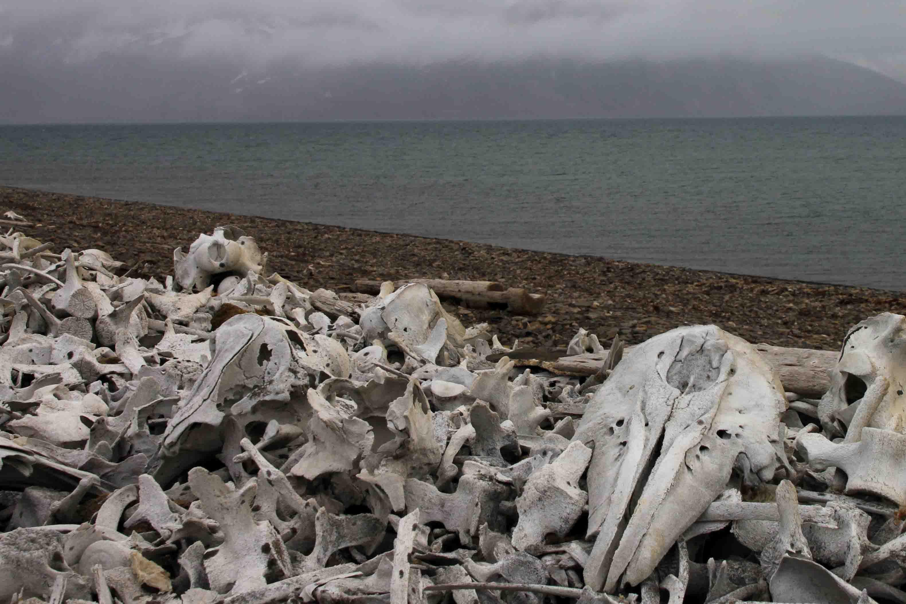 whale bones in the arctic