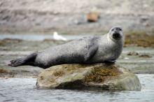 IMG_0318 seal adventuresofacouchsurfer