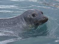 IMG_2248 seal