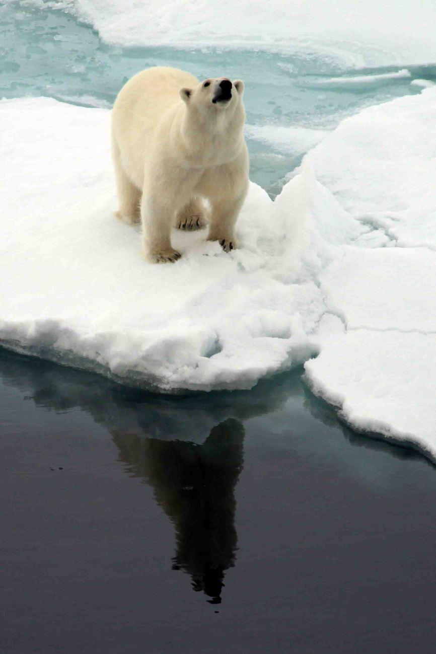 IMG_9098 polar bear adventuresofacouchsurfer