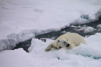 IMG_9394 polar bear adventuresofacouchsurfer