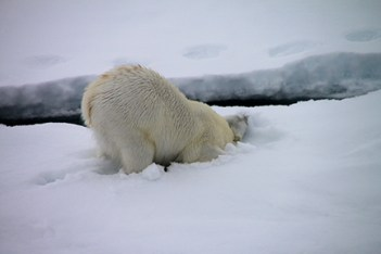IMG_9416 polar bear adventuresofacouchsurfer